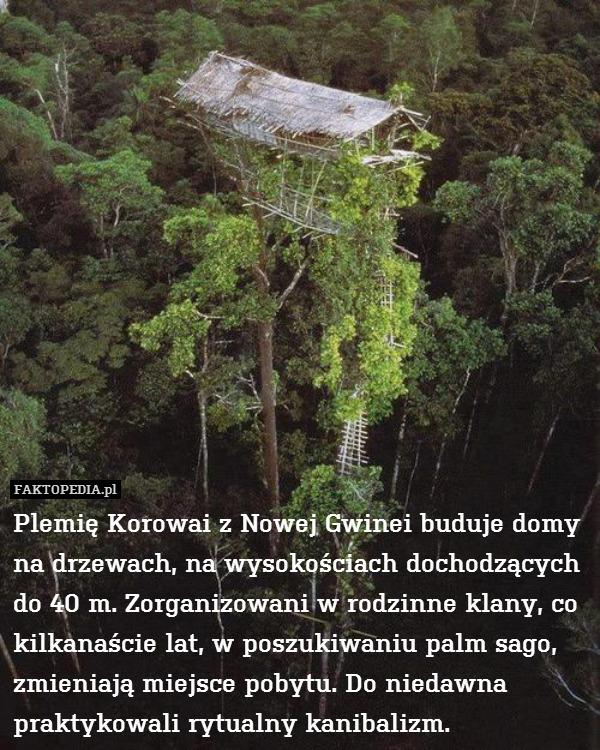 Plemię Korowai z Nowej Gwinei – Plemię Korowai z Nowej Gwinei buduje domy na drzewach, na wysokościach dochodzących do 40 m. Zorganizowani w rodzinne klany, co kilkanaście lat, w poszukiwaniu palm sago, zmieniają miejsce pobytu. Do niedawna praktykowali rytualny kanibalizm.