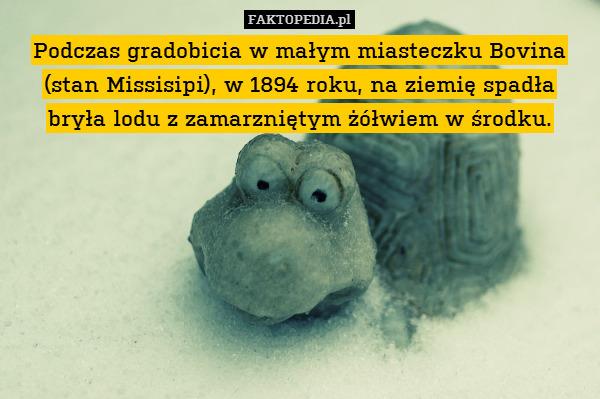 Podczas gradobicia w małym miasteczku – Podczas gradobicia w małym miasteczku Bovina (stan Missisipi), w 1894 roku, na ziemię spadła bryła lodu z zamarzniętym żółwiem w środku.