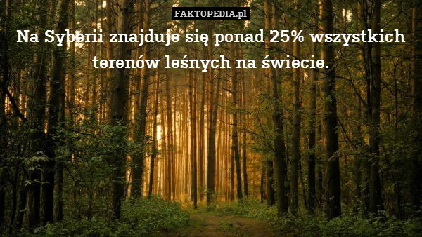 Na Syberii znajduje się ponad – Na Syberii znajduje się ponad 25% wszystkich terenów leśnych na świecie.