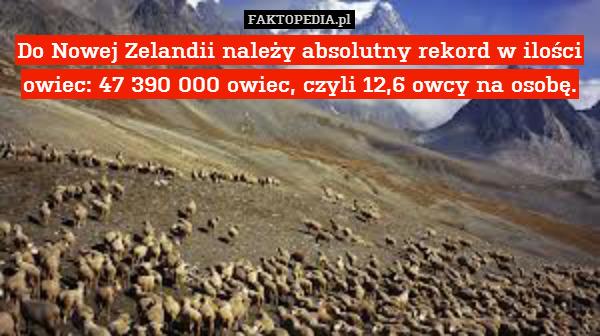 Do Nowej Zelandii należy absolutny – Do Nowej Zelandii należy absolutny rekord w ilości owiec: 47 390 000 owiec, czyli 12,6 owcy na osobę.