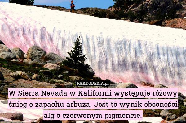 W Sierra Nevada w Kalifornii występuje – W Sierra Nevada w Kalifornii występuje różowy śnieg o zapachu arbuza. Jest to wynik obecności alg o czerwonym pigmencie.