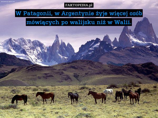 W Patagonii, w Argentynie żyje – W Patagonii, w Argentynie żyje więcej osób mówiących po walijsku niż w Walii.