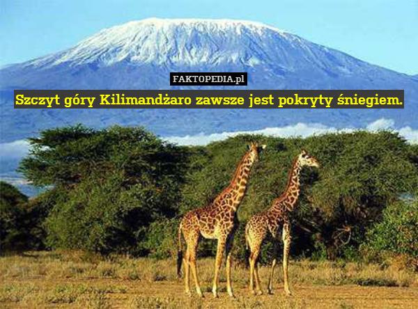 Szczyt góry Kilimandżaro zawsze – Szczyt góry Kilimandżaro zawsze jest pokryty śniegiem.