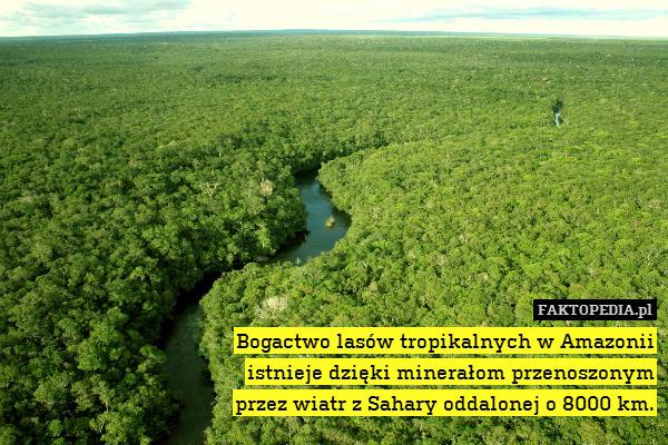 Bogactwo lasów tropikalnych w – Bogactwo lasów tropikalnych w Amazonii istnieje dzięki minerałom przenoszonym przez wiatr z Sahary oddalonej o 8000 km.