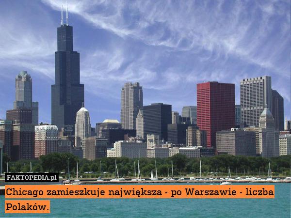 Chicago zamieszkuje największa – Chicago zamieszkuje największa - po Warszawie - liczba Polaków.