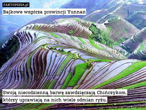 Bajkowe wzgórza prowincji Yunnan – Bajkowe wzgórza prowincji Yunnan           Swoją niecodzienną barwę zawdzięczają Chińczykom, którzy uprawiają na nich wiele odmian ryżu.