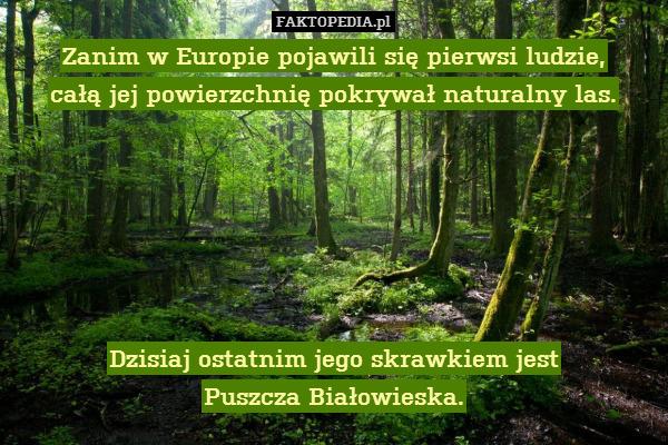Zanim w Europie pojawili się pierwsi – Zanim w Europie pojawili się pierwsi ludzie, całą jej powierzchnię pokrywał naturalny las.       Dzisiaj ostatnim jego skrawkiem jest Puszcza Białowieska.