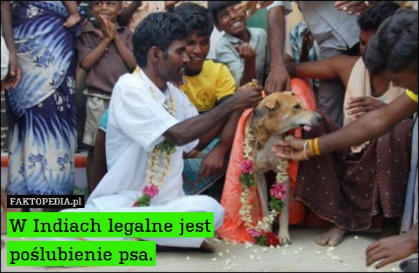 W Indiach legalne jest poślubienie – W Indiach legalne jest poślubienie psa.