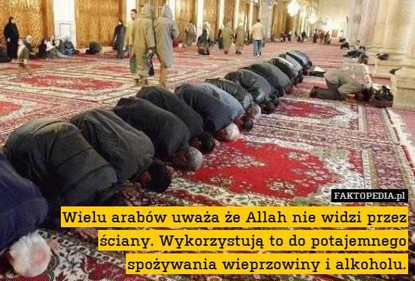 Wielu arabów uważa że Allah nie – Wielu arabów uważa że Allah nie widzi przez ściany. Wykorzystują to do potajemnego spożywania wieprzowiny i alkoholu.