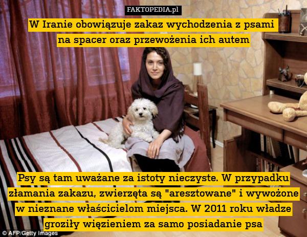 """W Iranie obowiązuje zakaz wychodzenia – W Iranie obowiązuje zakaz wychodzenia z psami  na spacer oraz przewożenia ich autem         Psy są tam uważane za istoty nieczyste. W przypadku złamania zakazu, zwierzęta są """"aresztowane"""" i wywożone w nieznane właścicielom miejsca. W 2011 roku władze groziły więzieniem za samo posiadanie psa"""