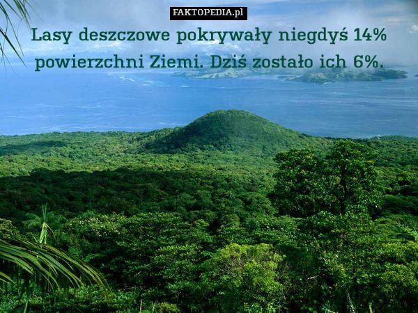 Lasy deszczowe pokrywały niegdyś – Lasy deszczowe pokrywały niegdyś 14% powierzchni Ziemi. Dziś zostało ich 6%.