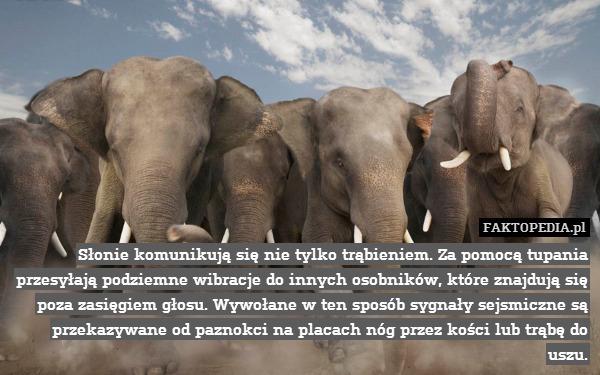 Słonie komunikują się nie tylko – Słonie komunikują się nie tylko trąbieniem. Za pomocą tupania przesyłają podziemne wibracje do innych osobników, które znajdują się poza zasięgiem głosu. Wywołane w ten sposób sygnały sejsmiczne są przekazywane od paznokci na placach nóg przez kości lub trąbę do uszu.