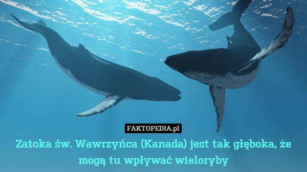 Zatoka św. Wawrzyńca (Kanada) – Zatoka św. Wawrzyńca (Kanada) jest tak głęboka, że mogą tu wpływać wieloryby