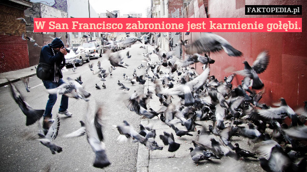 W San Francisco zabronione jest – W San Francisco zabronione jest karmienie gołębi.
