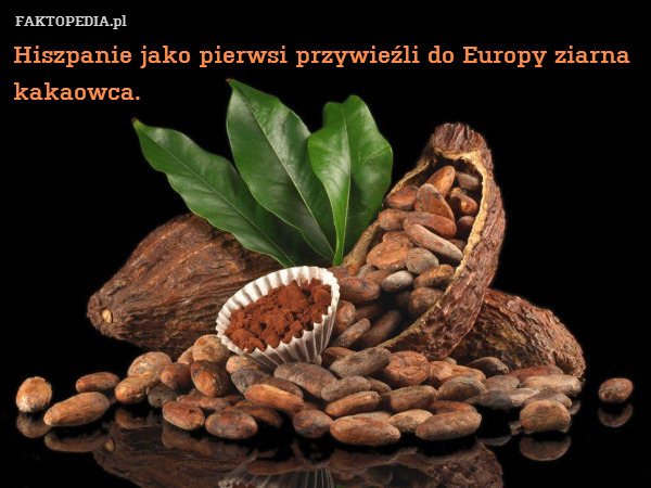 Hiszpanie jako pierwsi przywieźli – Hiszpanie jako pierwsi przywieźli do Europy ziarna kakaowca