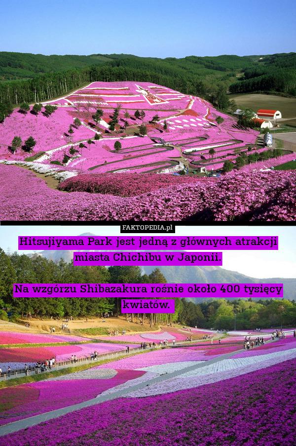 Hitsujiyama Park jest jedną z – Hitsujiyama Park jest jedną z głównych atrakcji miasta Chichibu w Japonii.  Na wzgórzu Shibazakura rośnie około 400 tysięcy kwiatów.