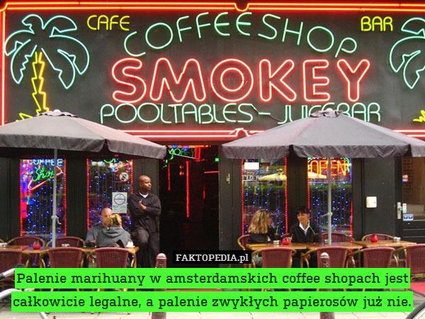Palenie marihuany w amsterdamskich – Palenie marihuany w amsterdamskich coffee shopach jest całkowicie legalne, a palenie zwykłych papierosów już nie