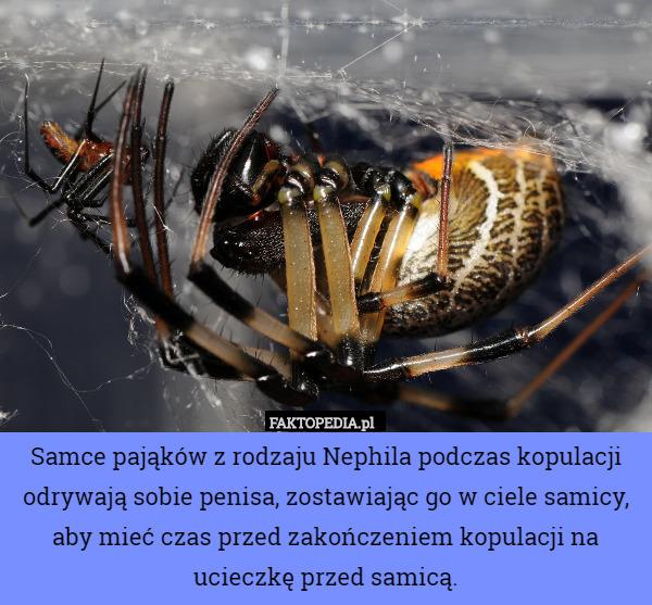Po co penisom kolce, skrzydełka i haczyki? - noco2.pl